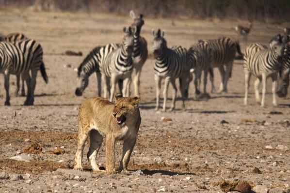 Lion 1628421 1280